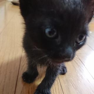 黒猫の赤ちゃん(ピンク)
