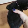 黒猫の赤ちゃん(ピンク) サムネイル2