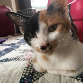 美猫三毛ちゃん