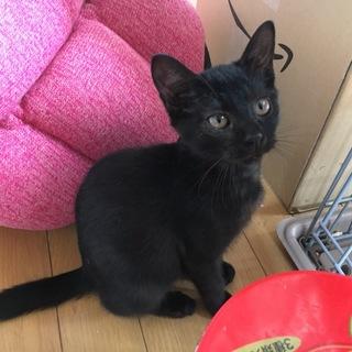おしとやかな黒猫ちゃん