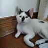 肉球柄のお尻★コアラ猫キキちゃん サムネイル2
