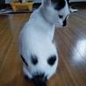 肉球柄のお尻★コアラ猫キキちゃん サムネイル3