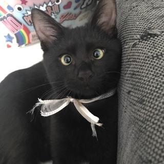 甘えん坊の黒猫君、家族にしてあげて下さい(^^)