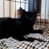イケにゃん黒猫やっくん★6ヶ月 サムネイル2
