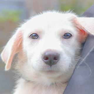 野犬 かわいい仔犬ケビンくん