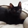 ゴールドアイの黒猫ちゃん❤