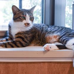 保護猫譲渡会 サムネイル3