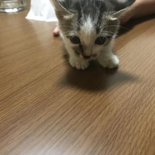 野良の仔猫です!