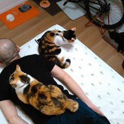 保護猫3匹たちの日常