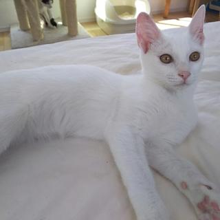 美猫!ツンデレ姫
