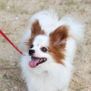 譲渡対象犬紹介