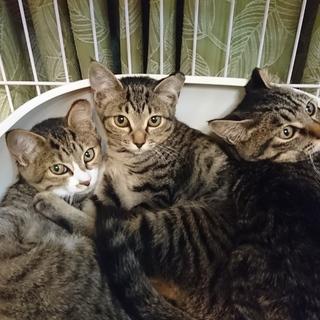 5月位生まれの姉妹4匹♪保護猫、地域猫