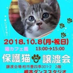 10/8(祝日) 猫カフェ風保護猫譲渡会Again