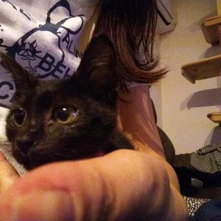 甘えん坊の2ヶ月黒猫の女の子です!!
