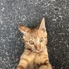 迷い猫❤︎ 預かる