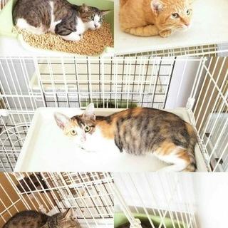 1才くらいの猫たち6匹