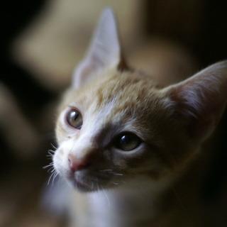 とにかく美しい!!モデル顔の子猫たち