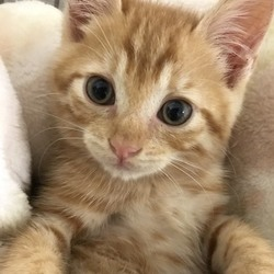 猫の里親会 緑区鳴海町 シービーテック