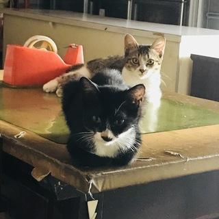 【愛媛県】子猫の里親様募集【急募】