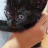 黒猫の赤ちゃん(あお) サムネイル4