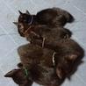 黒猫の赤ちゃん(あお) サムネイル5