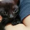 交渉中☆黒猫の赤ちゃん(みどり) サムネイル5