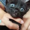 黒猫の赤ちゃん(ピンク) サムネイル4