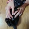 黒猫の赤ちゃん(ピンク) サムネイル5