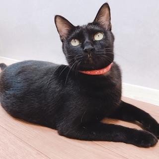 穏やかで可愛い黒猫あざみちゃん