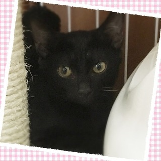 黒猫♪黒蜜ちゃん♪3ヶ月くらい