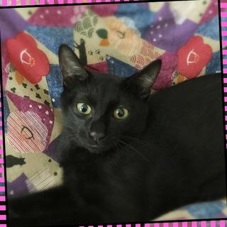 黒猫♪甘太郎くん♪3ヶ月くらい