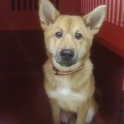 9月22日(土)に、愛知県蒲郡市で5ヶ月の犬の譲渡会