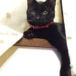 愛嬌たっぷり黒猫オレちゃん(仮称)