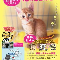 【臨時開催】10月8日にゃんクルー子猫だけの譲渡会