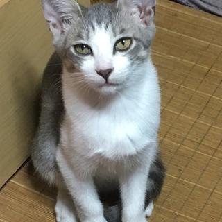 三ヶ月半の子猫ちゃん☆★☆