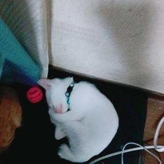 白猫ちゃんのラン