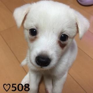 ♡508 甘えん坊の子犬ちゃん