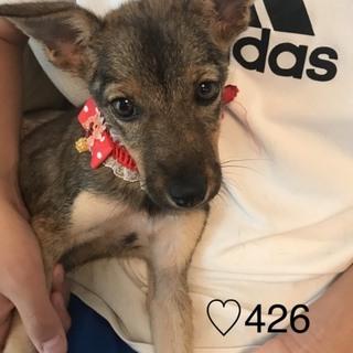 ♡426 小ぶりな子犬です。