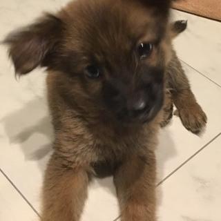 ☆535 1.8キロ小さいな子犬