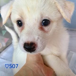 ♡507 可愛い白雪姫
