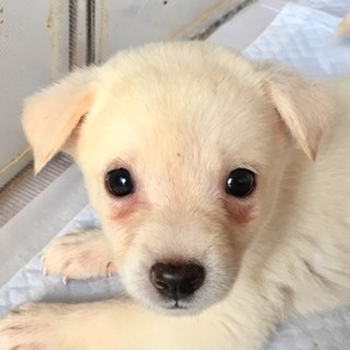 ♡511 ちっちゃなちっちゃな子犬です。