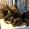 子猫5匹と一緒に収容されました
