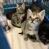 子猫5匹が収容されています