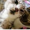 【あたこ】スリスリゴロゴロ甘えん坊! サムネイル3