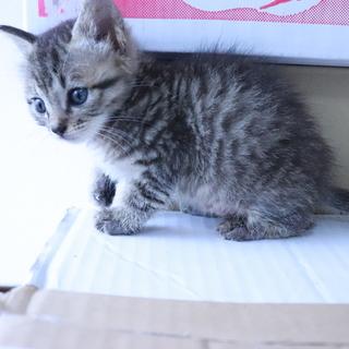 猫の兄弟3匹の里親を募集しています。