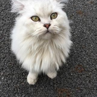 棄てられたかもしれない猫さんです