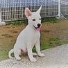 白くて可愛い仔犬さん!