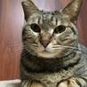 猫らしい猫、あきちゃん