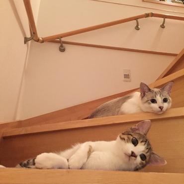 階段を占拠   かりんちゃん1キロ太りました。オヤツ食べすぎかなぁ。。