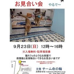 姫路市にて、猫カフェみたいな譲渡会やります!